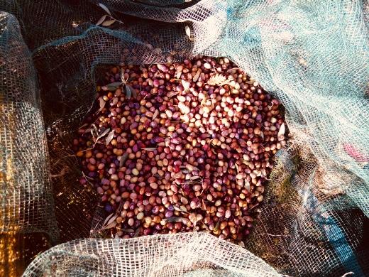 Huile d'olive du Voconce